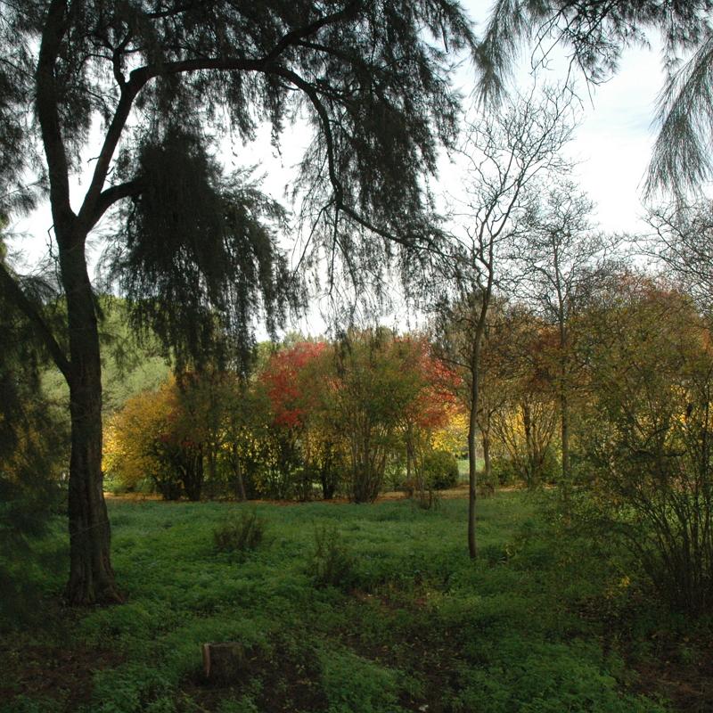 Parque Forestal de Maribáñez